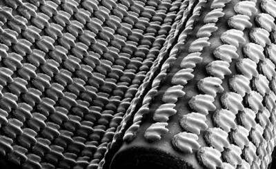 Artificial shark skin with rigid denticles attached to a flexible membrane