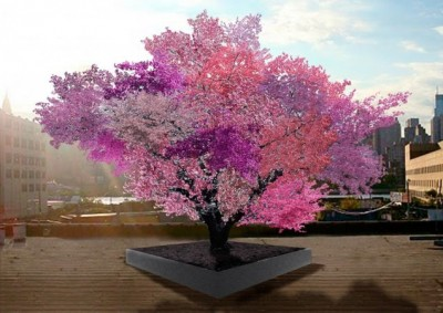 Chip-Grafted Tree with 40 Varieties