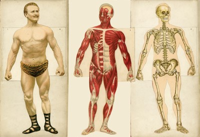 Eugen Sandow Anatomy Diagram