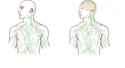 Maps of the Lymphatic System