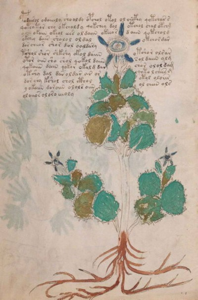 Voynich Folio 19 Borago officinalis